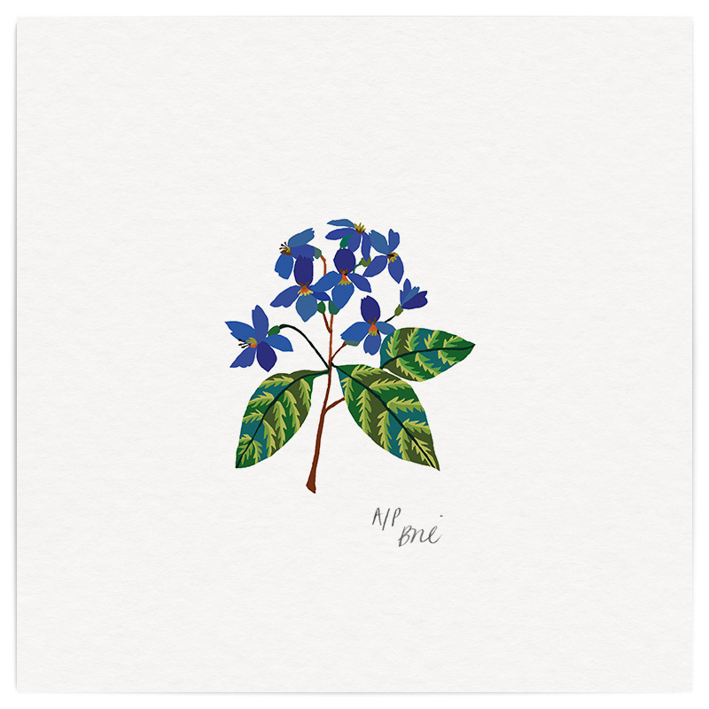Violets Giclée Print on Archival Paper Edition of 40, signed 20 x 20cm Unframed  £34   © Brie Harrison 2016