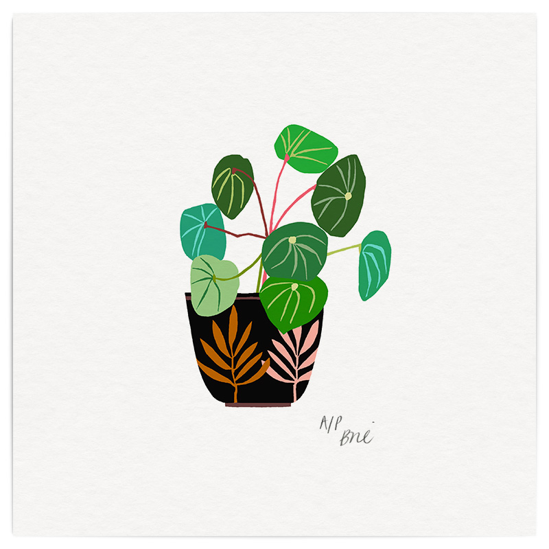 Chinese Coin Plant Giclée Print on Archival Paper Edition of 40, signed 20 x 20cm Unframed  £34   © Brie Harrison 2017