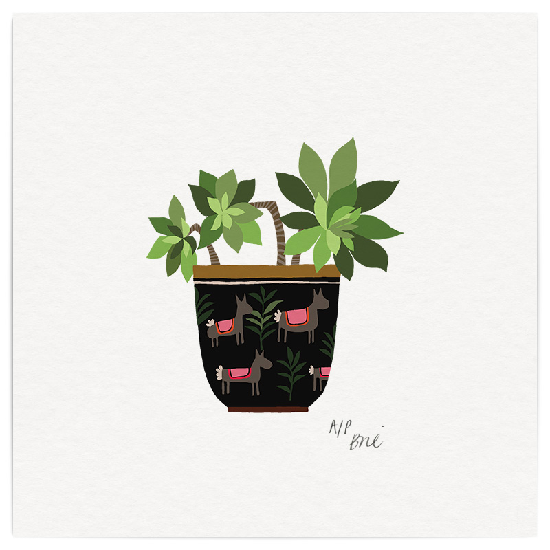 Succulent Giclée Print on Archival Paper Edition of 40, signed 20 x 20cm Unframed  New  £34   © Brie Harrison 2017