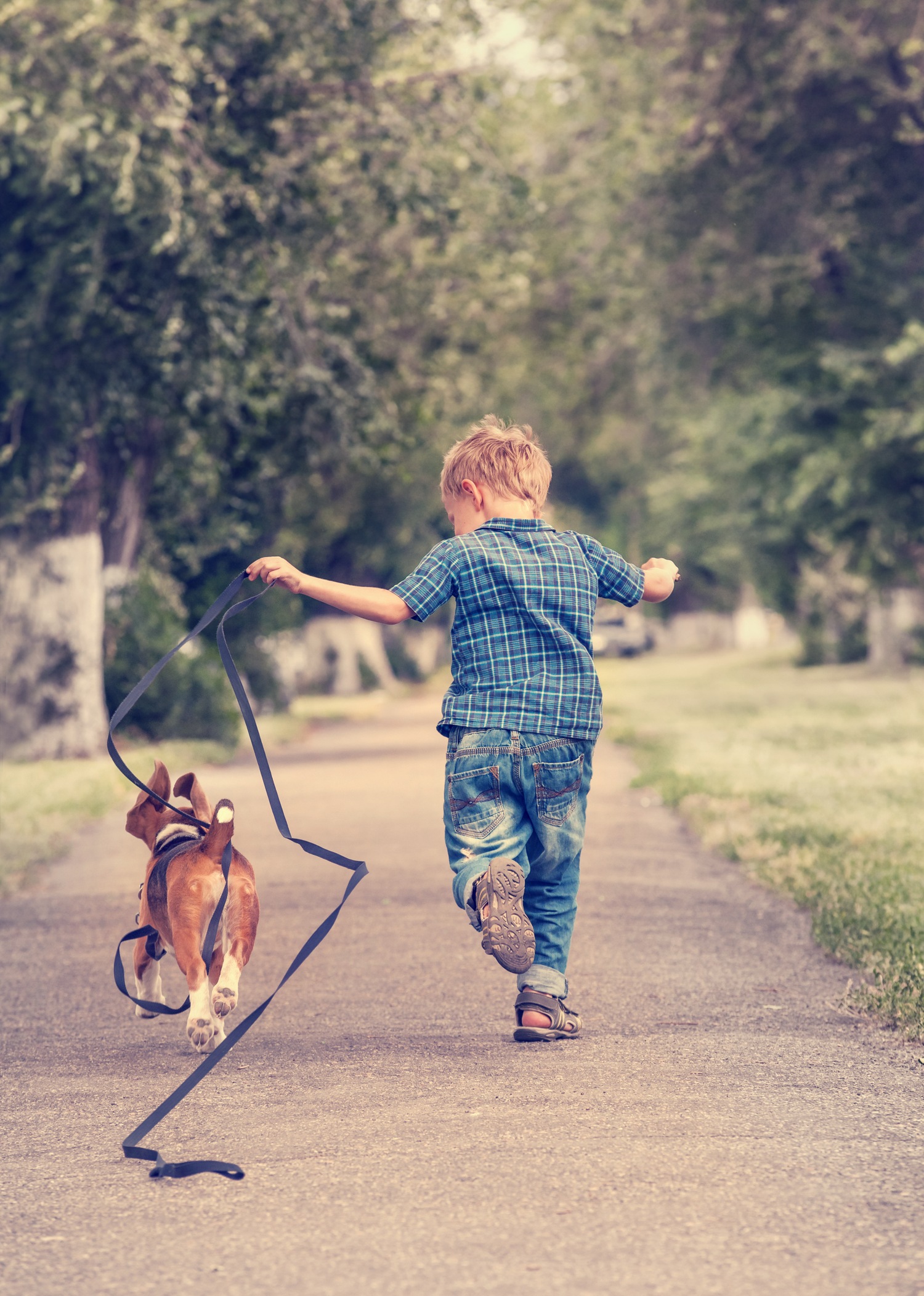 STRANGER'S RESPONSE TO TODDLER'S LETTER TO LATE DOG WILL MAKE YOUR TAIL WAG