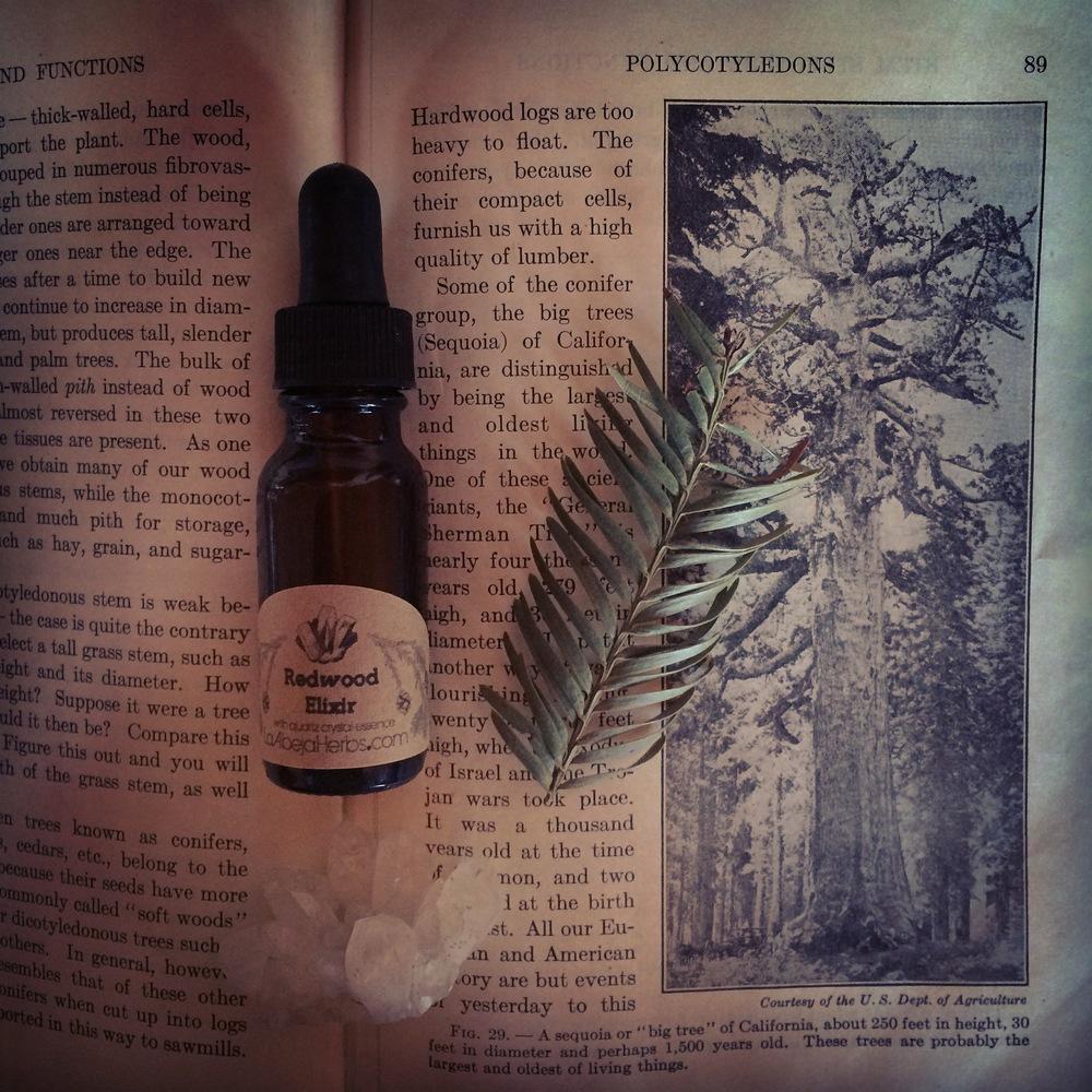 Redwood Elixir 3.JPG