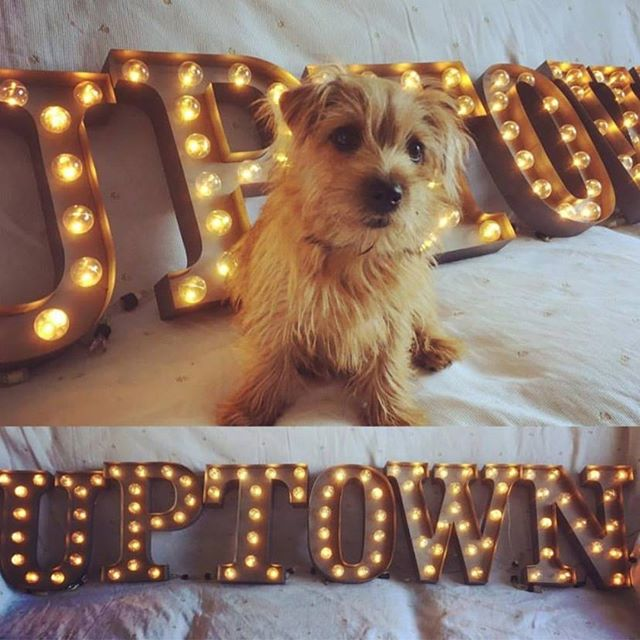 uptownstore.com - that do is so cute... our Carnival lights arent bad either...