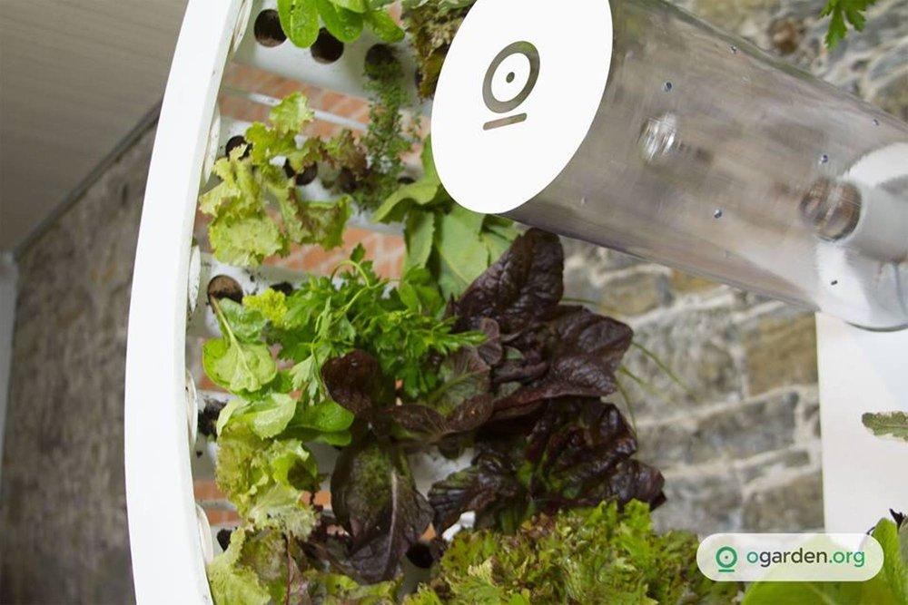 OGarden-plants-environment-agriculture-home-visualatelier8-3.jpg