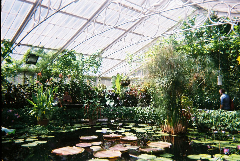 8th July - Kew Gardens