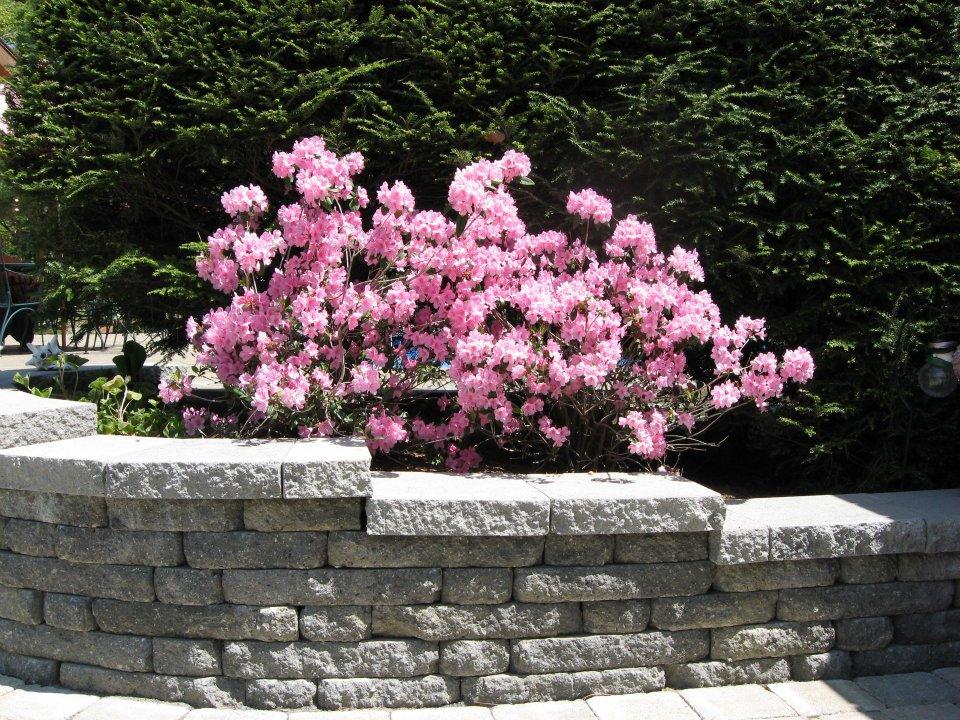 wall and garden.jpg