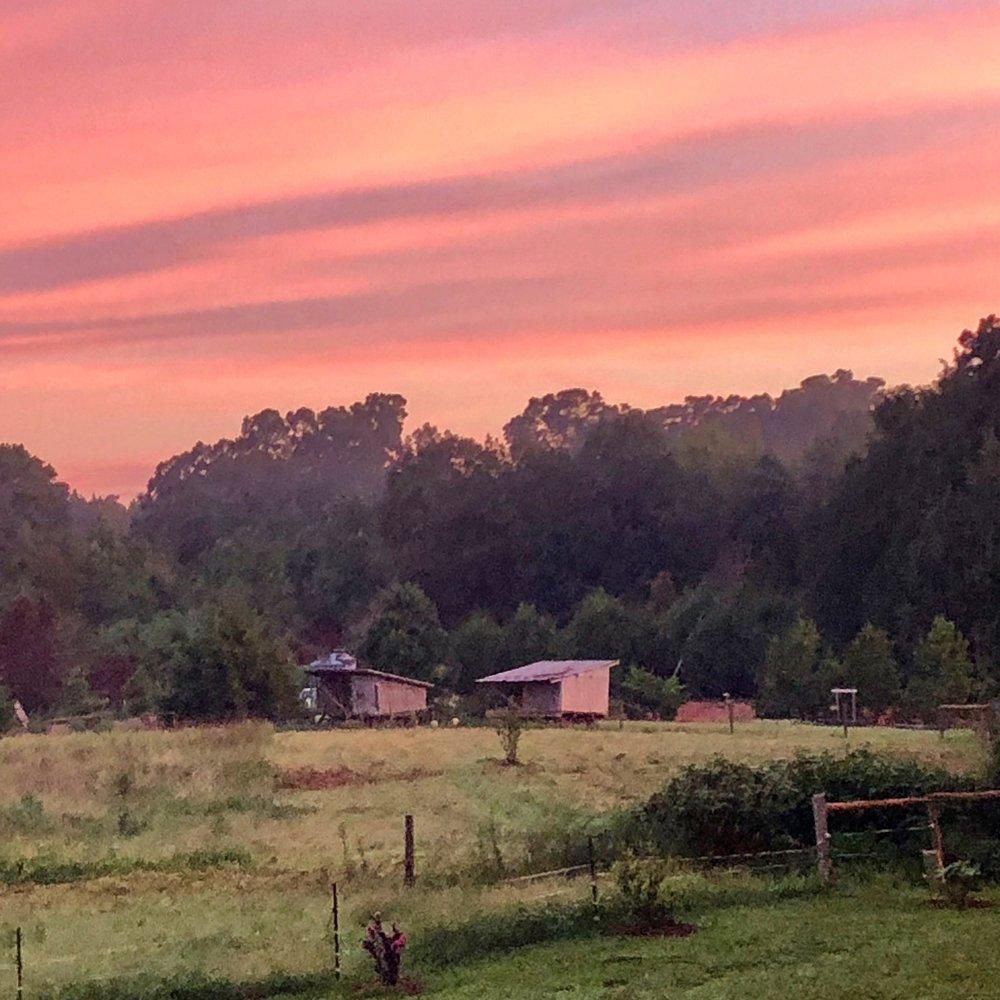 cane sunset.jpg