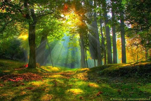 forest+of+the+Malikuun.jpg
