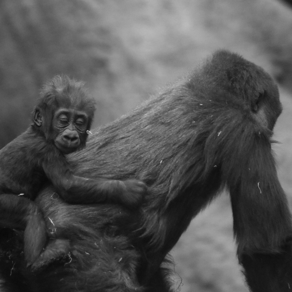 CHANGE FOR CHIMPS - Change for Chimps, featuring Dr. Jane Goodall, which has won an award for Most Uplifting Film at a film festival in Baltimore, Maryland, and an award for Best Family Film at a film festival in Saint John, NB.