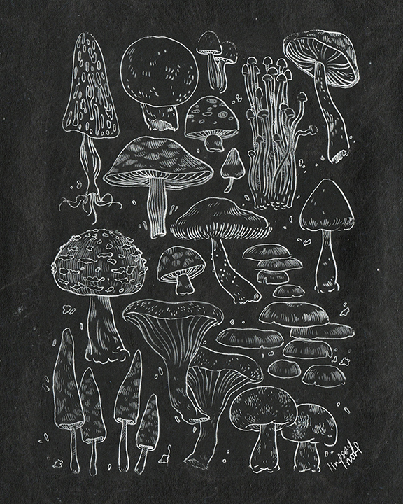 MushroomCollection_LindsayNohl_chalk_.jpg