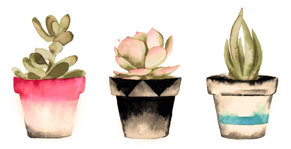 Succulents Pink Story