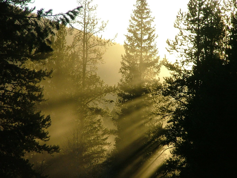 Forest Rays (Amy Jerup photo)