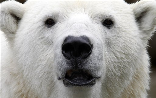 Churchill: Reviving Polar Bear as Spirit Guide