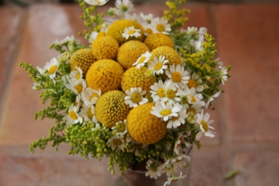 Golden bachelor buttons, white chamomile and goldenrod make a smart little bouquet.