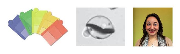 (L) Colored plastic samples. (C) a microbead encapsulating a metallic flake. (R) Fazila Seker, Ph.D. developed the encapsulation process that makes sparkly plastic beautiful.