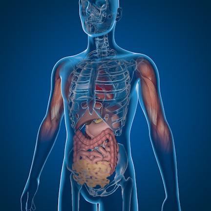 GLP-1 RAs In The Body