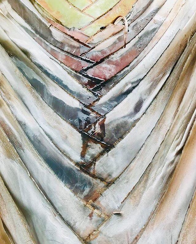 #Layers #palmtree 📸 : @yivram