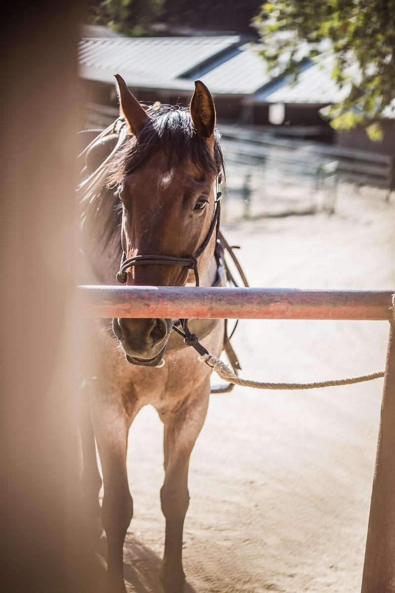 Ojai-horsmanship-equine-school-photography-26.jpg