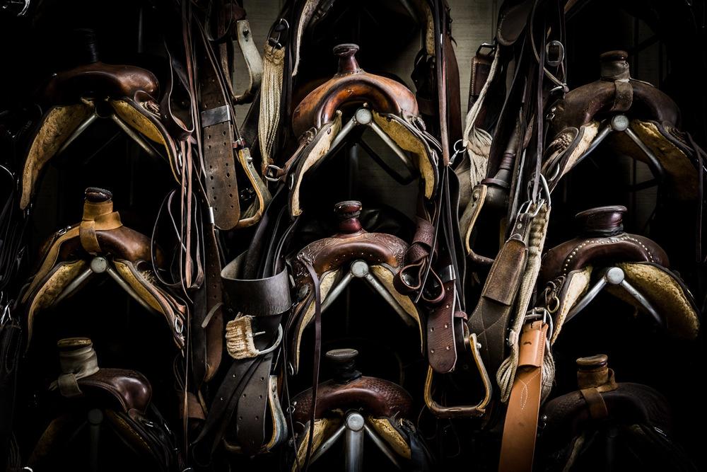 Ojai-horsmanship-equine-school-photography-41.jpg