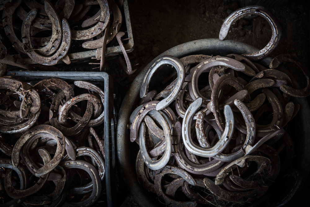 Ojai-horsmanship-equine-school-photography-68.jpg
