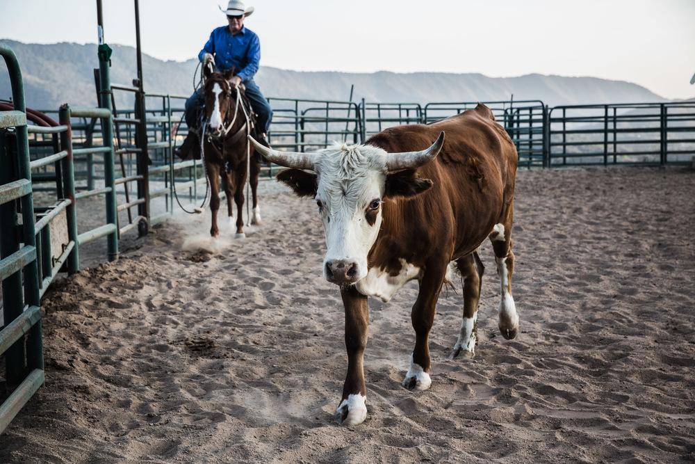 Ojai-horsmanship-equine-school-photography-73.jpg