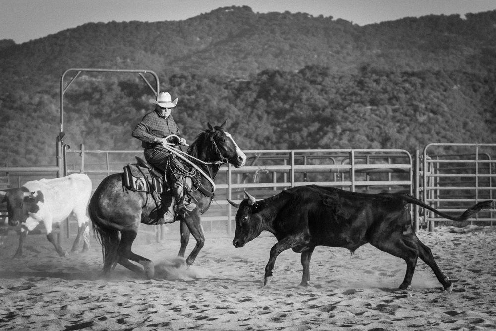 Ojai-horsmanship-equine-school-photography-79.jpg