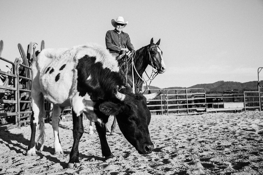 Ojai-horsmanship-equine-school-photography-81.jpg