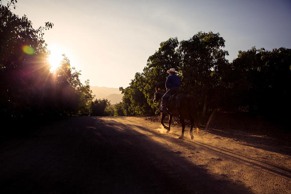 Ojai-horsmanship-equine-school-photography-108.jpg