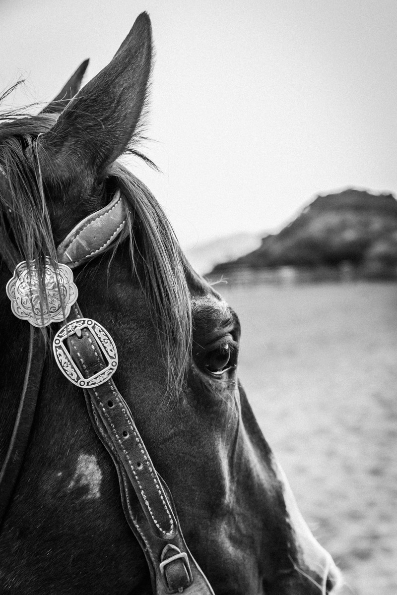Ojai-horsmanship-equine-school-photography-90.jpg