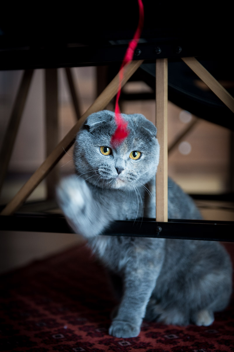lifestyle-feline-photography.jpg