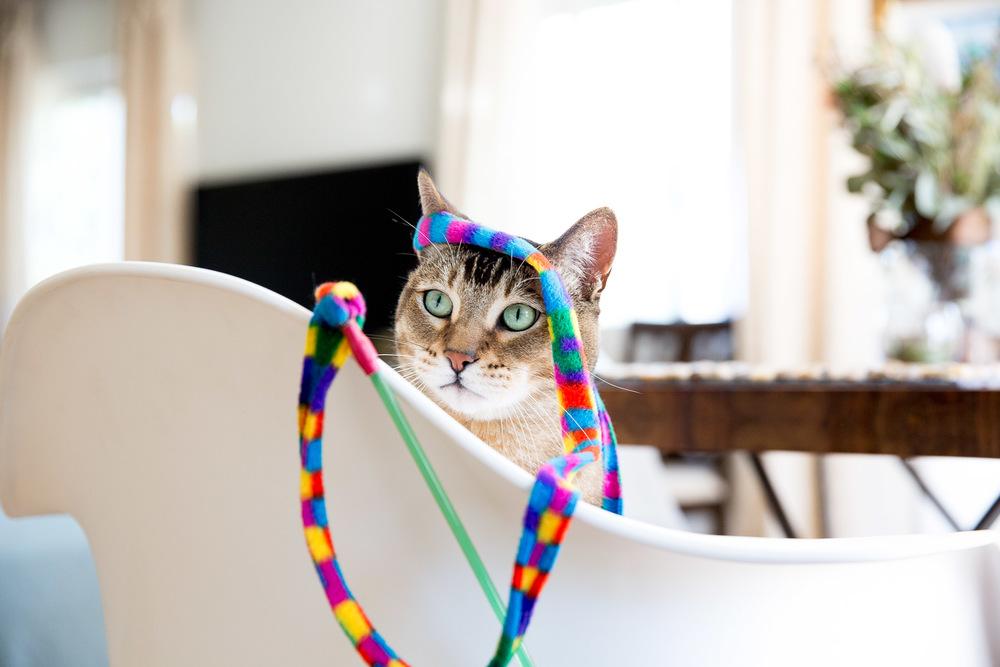 best-cat-photographer-los-angeles.jpg