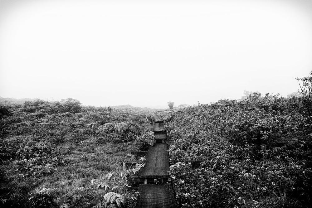 alakai-swamp-trail-hike-kauai.jpg