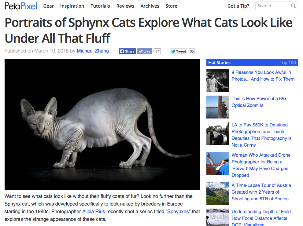 fine-art-professional-cat-photographer-los-angeles.jpg
