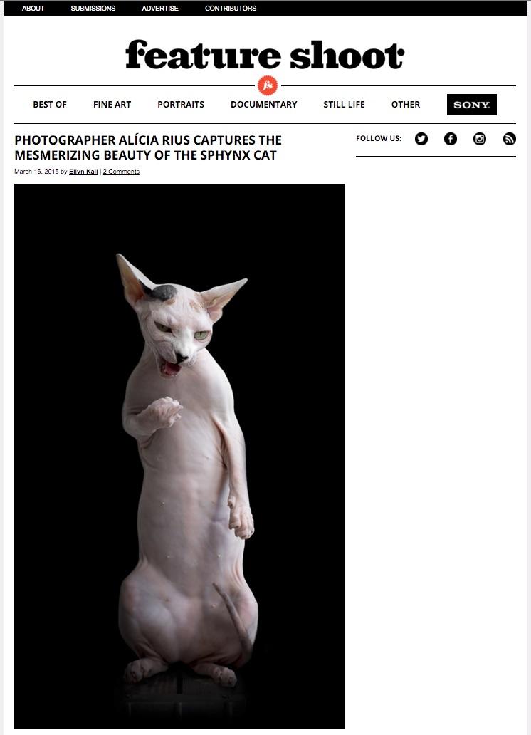feature-shoot-aliciar-rius-the-cat-photographer-la.jpg