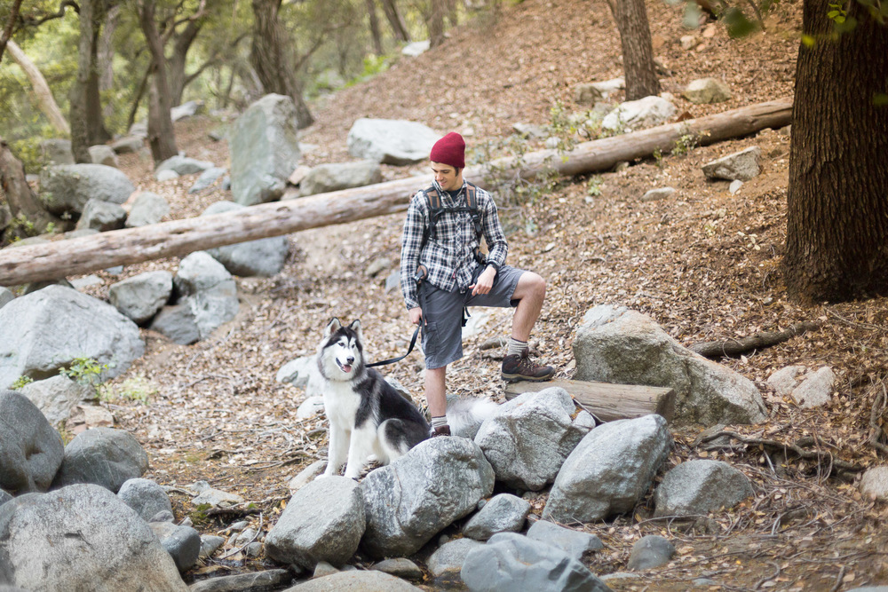 model-with-husky-dog-posing-on-rock-forest-pet-photos.jpg