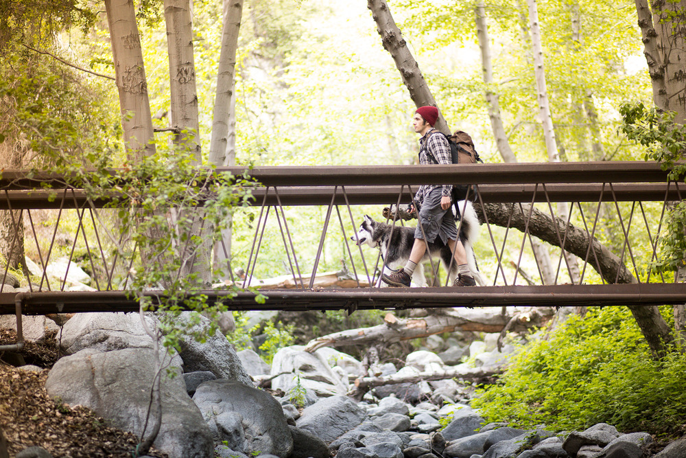 man-and-husky-walking-on-bridge-forest.jpg