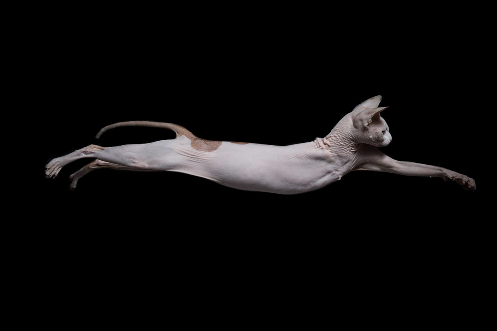 commercial-animal-photographer-LA.jpg