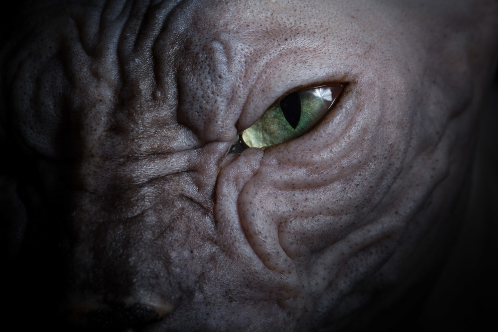 macro-shot-sphynx-eye-cat-photographer.jpg