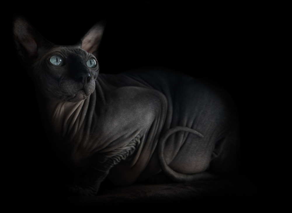 sphynx-cat-photos-by-alicia-rius-7.jpg