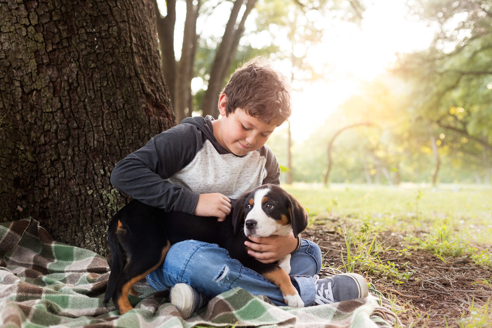 dog-swiss-bernese-puppu-with-boy-kid-together-forest-at-sunset.jpg