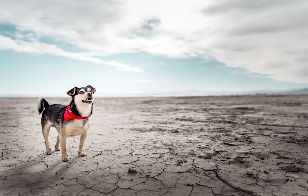 dog-in-desert-salton-sea-dog-photographer-alicia-rius-los-angeles.jpg