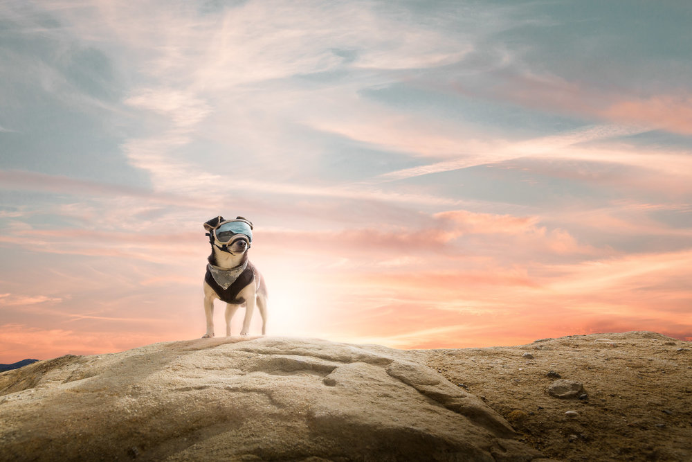 los-angeles-dog-photographer-dog-hiking-sunset-with-dog-goggles-rexspecs.jpg