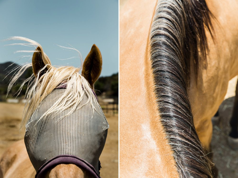 horse-photography-equine-photos-ranch.jpg