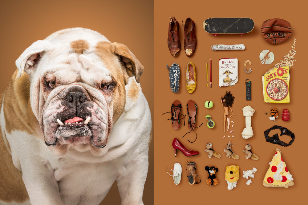 Destroyer-dog-heavy-chewer-knolling-photography-series-dog-portraits.jpg