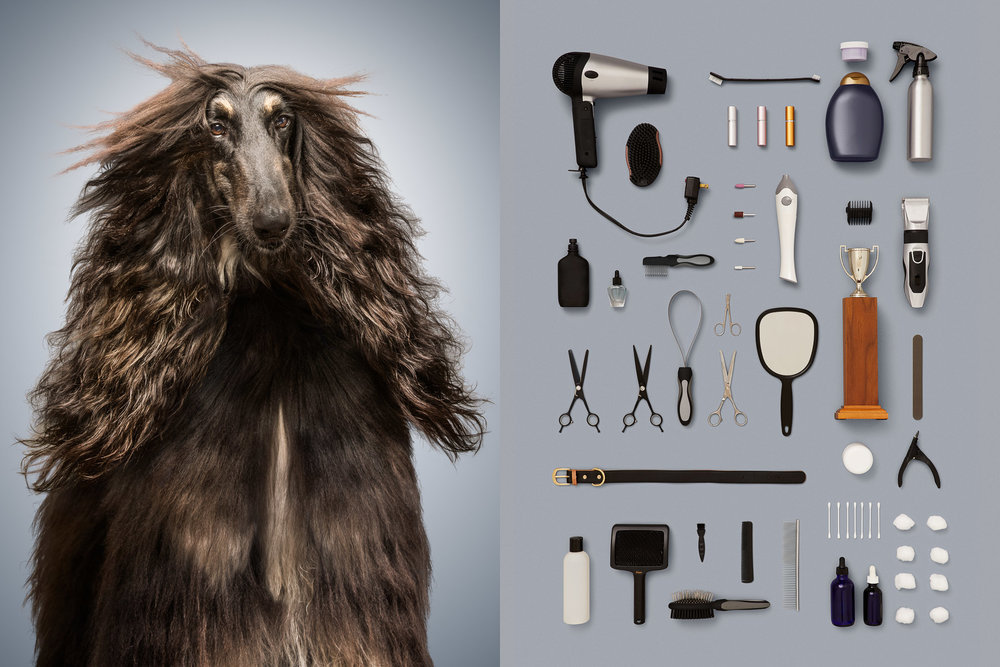 Best-in-show-dog-afghan-hound-portrait-elegant-knolling-pet-grooming-items.jpg