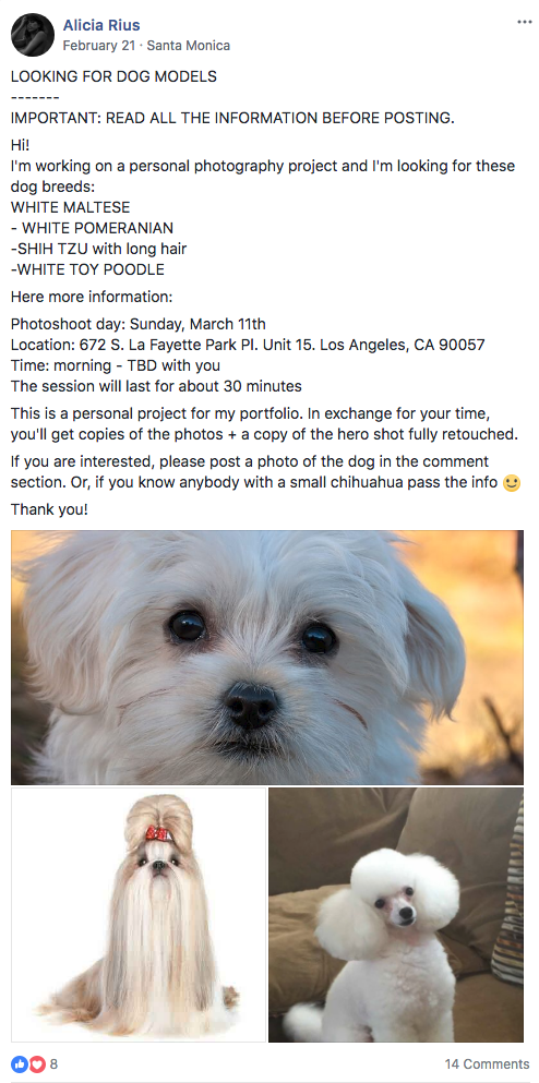 "One of the many ""Call for dog models"" posts I posted on Facebook"