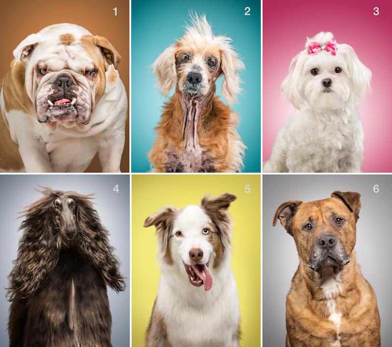 dog-models