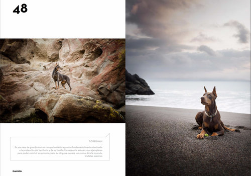 oh-my-dog-magazine-doberman-photo-at-beach-on-rocks.jpg
