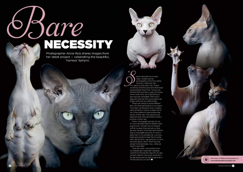 your-cat-magazine-uk-publication-sphynx-cat.jpg