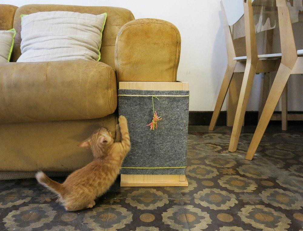 bixu sofa 2 web.jpg