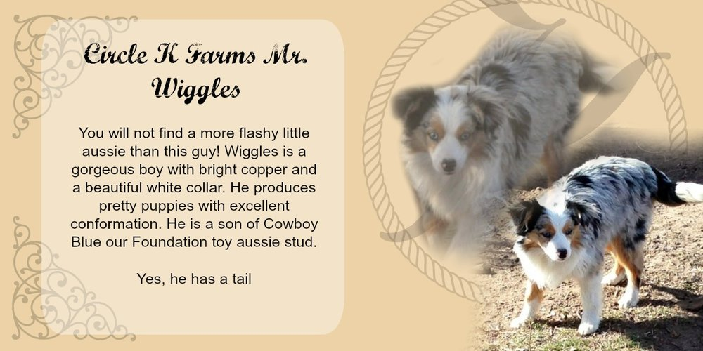 Circle C Australian Shepherds Circle K Dads — Circ...